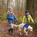 Top 10 Best No Pull Reflective Adjustable Pet Vest in 2021 Reviews