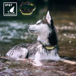 Top 10 Best Waterproof and Rechargeable Shock Collar for Dogs in 2021 Complete Reviews